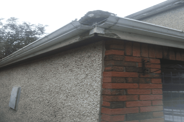 Fascia Board Gutter Replacement in