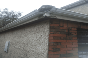 Fascia Soffit and Gutter Replacement